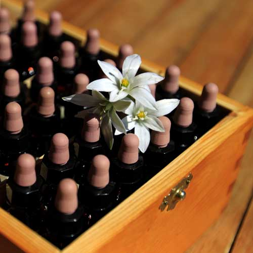 Fleurs de Bach Colmar