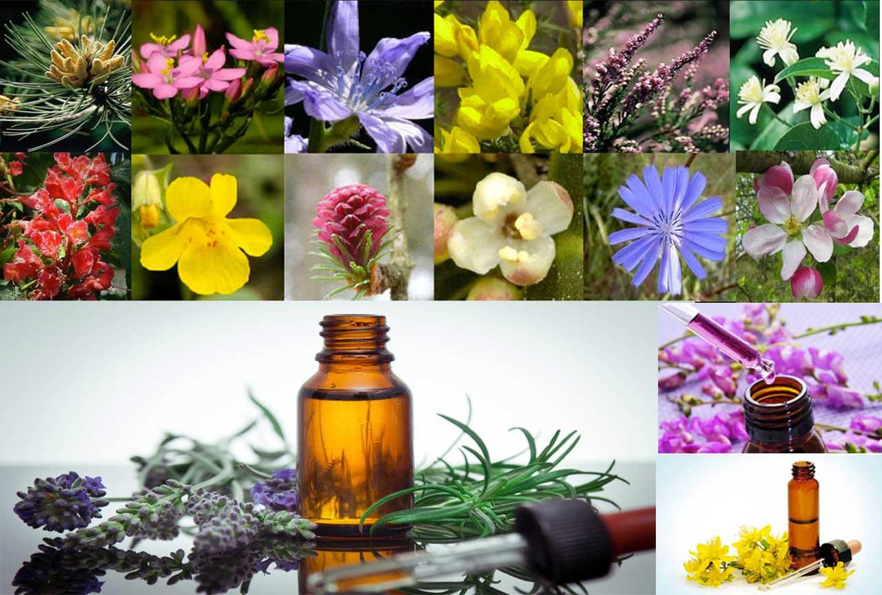 Fleurs de Bach et naturopathie à Colmar